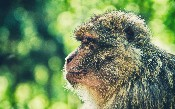 Chaos Monkey cho Spring Boot Microservices