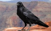 Đồ thị trong RavenDB: Chọn Cú pháp