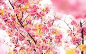 GraphQL: Hiểu dữ liệu mùa xuân JPA / Spring Boot