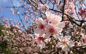GraphQL: Hiểu về dữ liệu mùa xuân JPA / Spring Boot - Phần 2