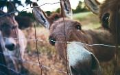 Caching trong Mule 4: Cách hoạt động