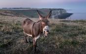 Thêm thời gian chạy độc lập của Mule 4 làm máy chủ tại chỗ trong nền tảng Anypoint ...