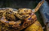 10 thông tin chi tiết về Python cần biết