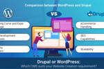 Drupal or WordPress: Which CMS suits your Website Creation requirement?