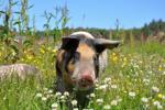 Bộ đếm trong Apache Pig