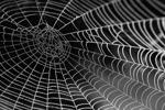Xem xét lại quản lý thiết bị dựa trên web