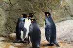 Tibbo công bố Ban phát triển dựa trên Linux đầu tiên của mình