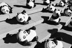Phần 2: Truy vấn SQL trong Pandas Scripting (Lọc và nối dữ liệu)