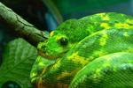 Python 201: têntuple