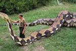 Hợp tác kỹ thuật Mở rộng hệ sinh thái Anaconda