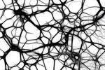 Trí tuệ nhân tạo và mạng lưới thần kinh trên GPU nhỏ
