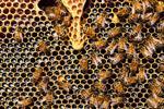 Cơ sở dữ liệu Hive: Giới thiệu cơ bản