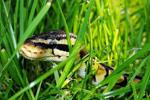 Python: Six, ABC và funcools.wraps